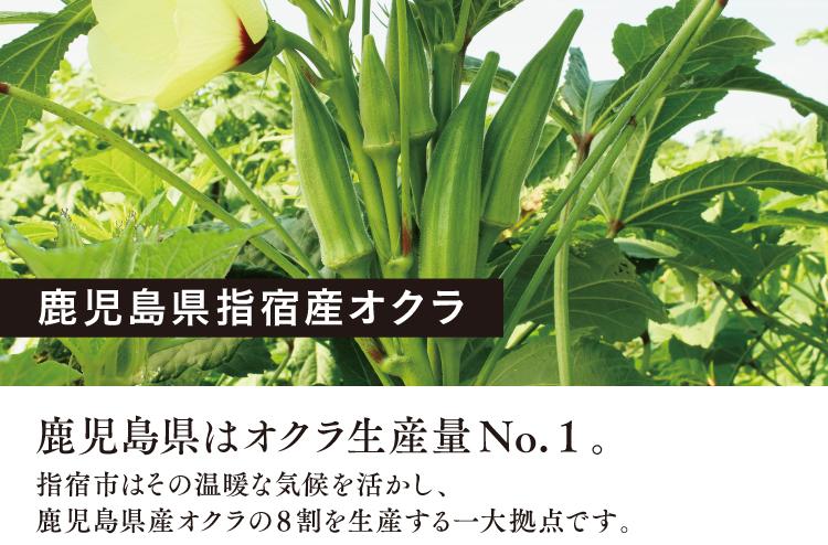 鹿児島県指宿産オクラ-鹿児島県はオクラ生産量No.1